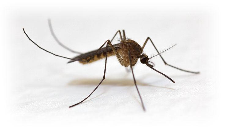 Al via la prima disinfestazione contro le zanzare