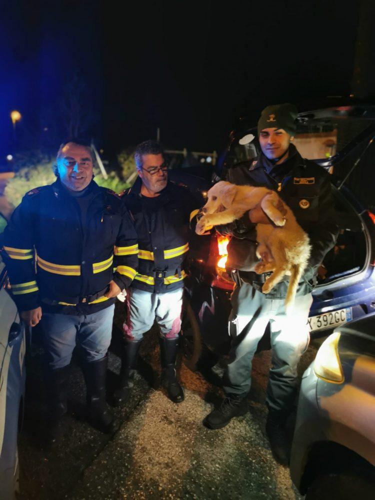 Cucciola di maremmano salvata dal Nogra
