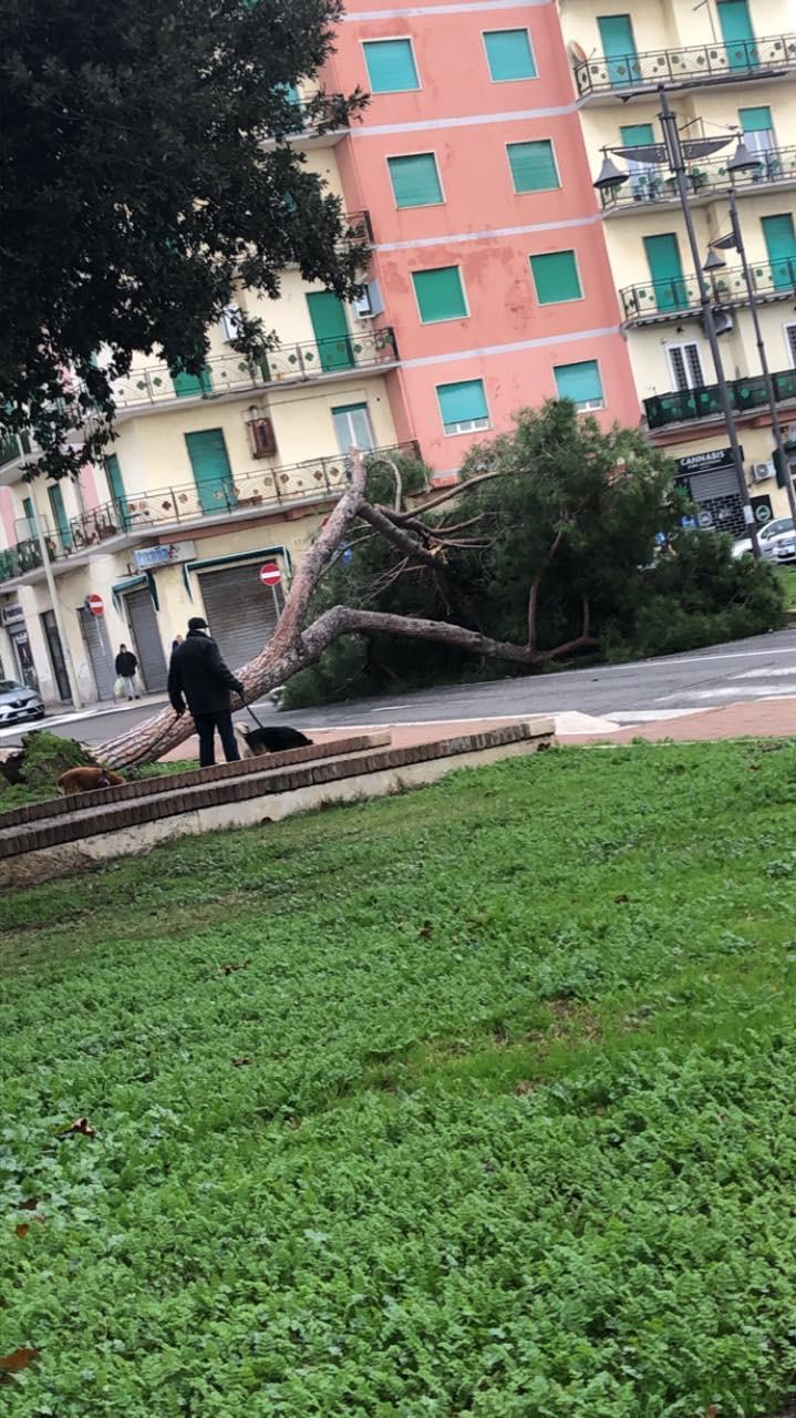 Ladispoli, cadono alberi per il forte vento