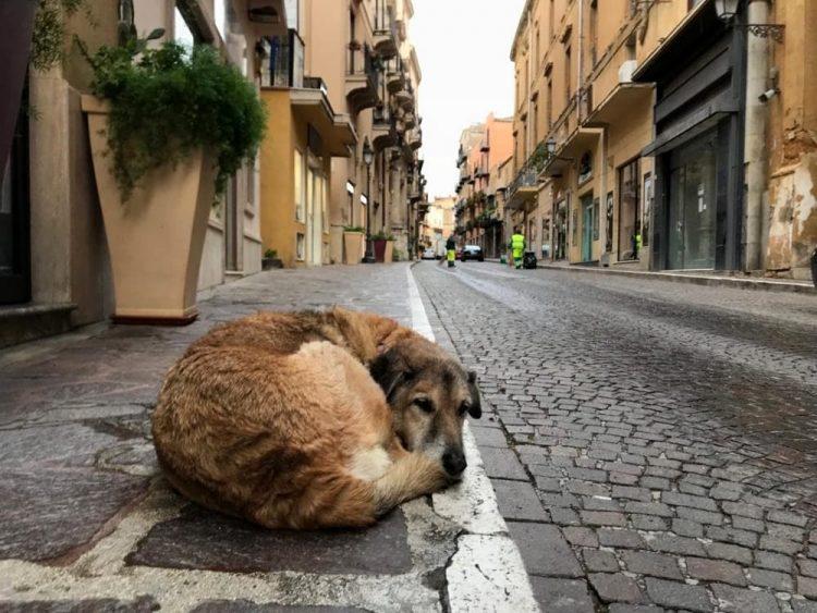 Cani scomparsi, arriva la petizione