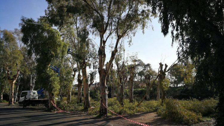 Partito il restyling del parco degli Eucalipti