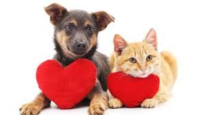 San Valentino pro amici a quattro zampe