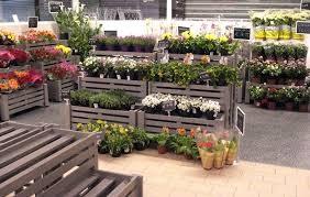 """MIPAAF, Bellanova: """"Consentita la vendita al dettaglio di fiori e piante"""""""