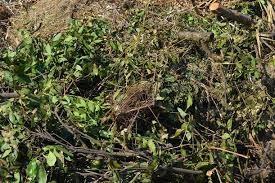 CSP, da domani attivo il servizio gratuito residui potatura e sfalci d'erba