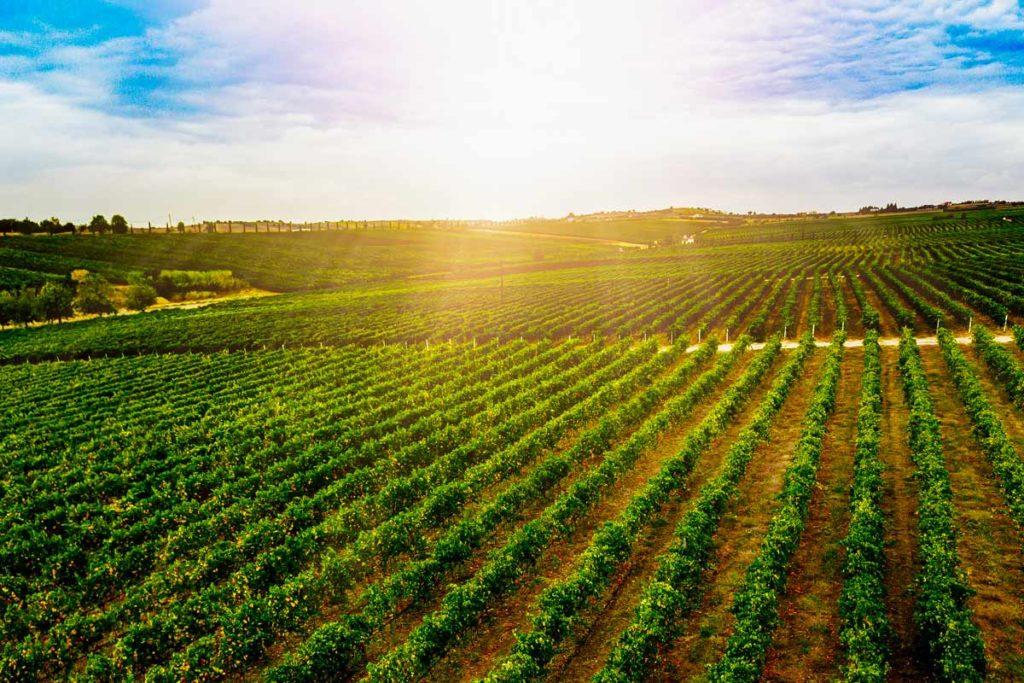 Agricoltura, Silvia Blasi: «Servono fondi per l'e-commerce e il delivery»
