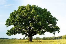 """""""Piantiamo un albero per ogni civitavecchiese vittima del coronavirus"""""""