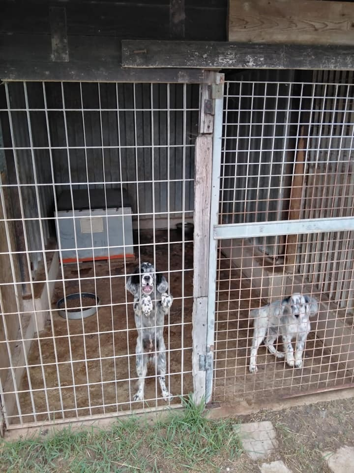 Cani da caccia ceduti senza passaggio di proprietà