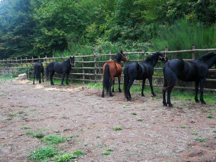 Cavalli non denunciati, l'Agraria pronta alla cattura su larga scala