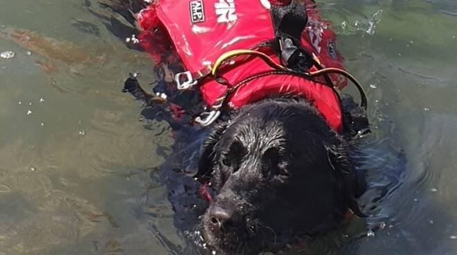 Ragazzo rischia di annegare: salvato dal cane bagnino
