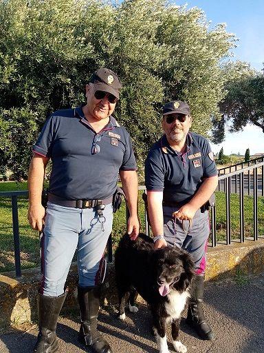 Cane vicino all'autostrada: salvato dalla Polizia