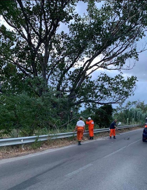 Raffiche di vento: rami e alberi caduti