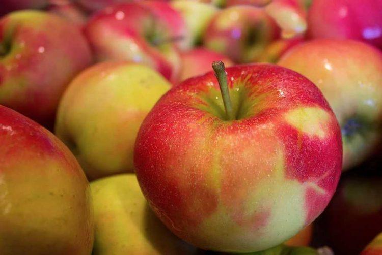 La Croce rossa     di nuovo in piazza     con le mele dell'Aism