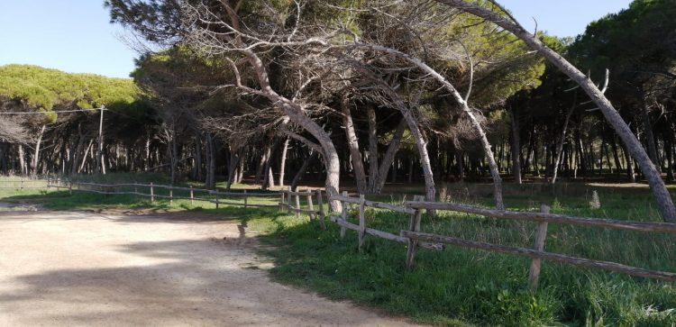 Villa romana alla Frasca, Magliani scrive all'Adsp