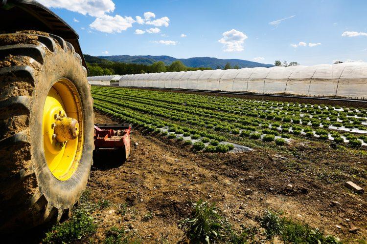 Lega Lazio: la Regione ascolti il grido di allarme dei giovani agricoltori
