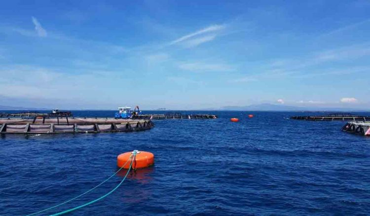 "Gruppo M5S: "" Questione pescicoltura: assurda l'assenza di Enel"""