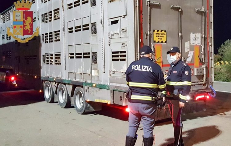 Trasporto irregolare di animali vivi:  33mila euro di sanzioni