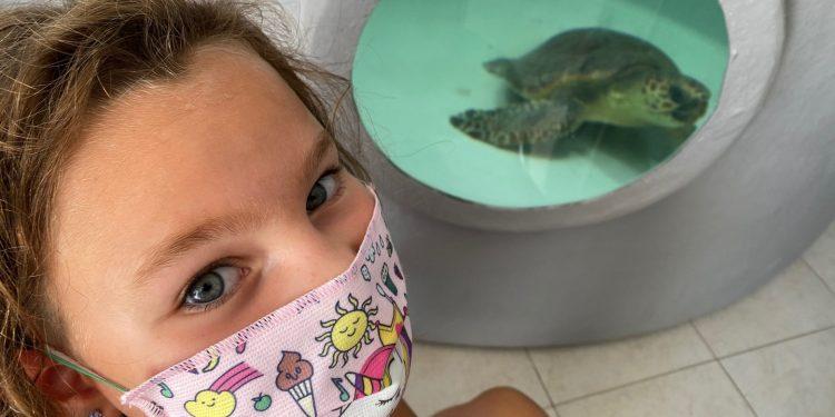 Winter, la tartaruga spiaggiata     e salvata da Martina e dalla mamma