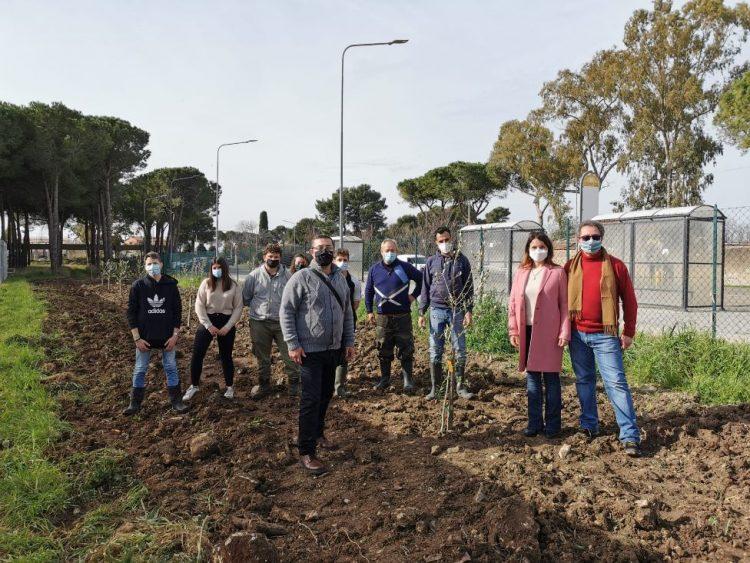 Olitar dona al Cardarelli di Tarquinia, sezione Agraria, 15 piante di Ulivo
