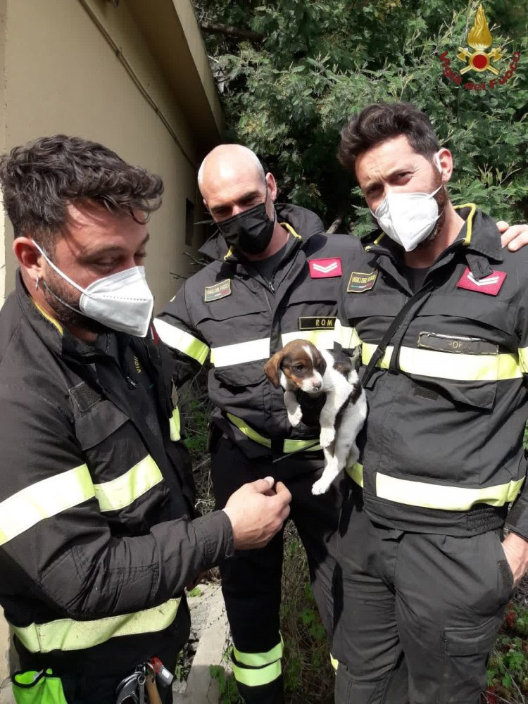 Cucciolo cade in un tombino profondo di 2 metri, salvato dai vigili del fuoco di Cerveteri
