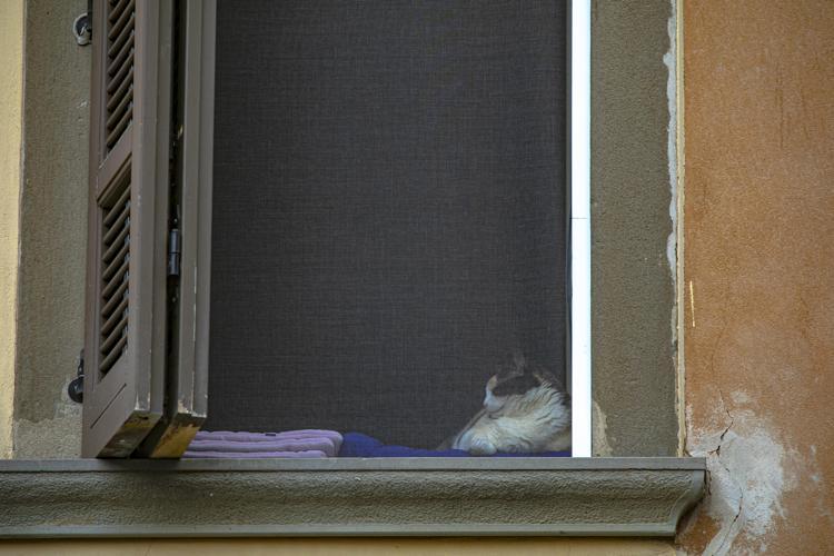 Variante inglese Covid in un gatto: primo caso in Italia