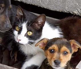 Pronto soccorso veterinario     per animali randagi:      firmata la convenzione