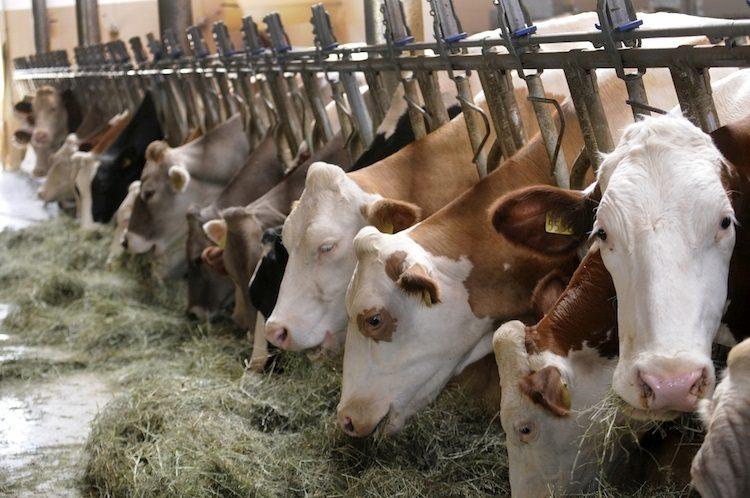 Zootecnia, arrivano i fondi per le aziende agricole