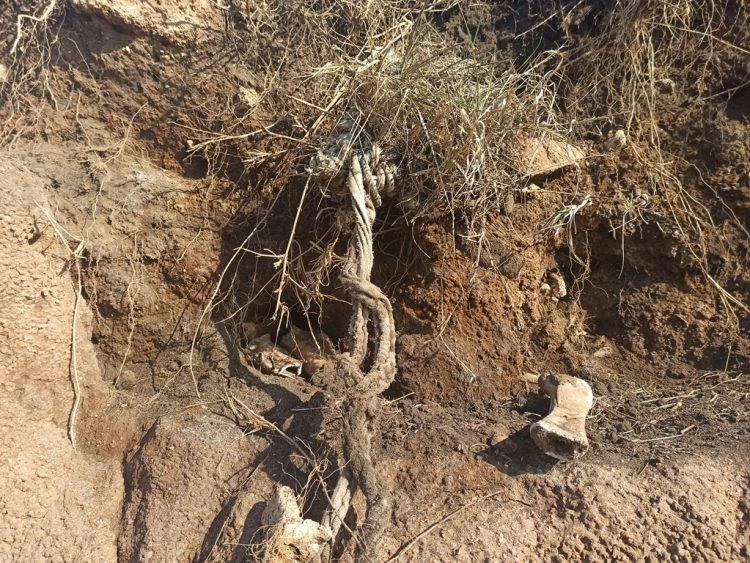 Sulla spiaggia  di Palo riaffiorano ancora ossa