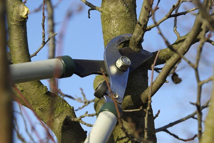 Il principe Ruspoli dovrà potare i suoi alberi, lo ha deciso il Tar del Lazio