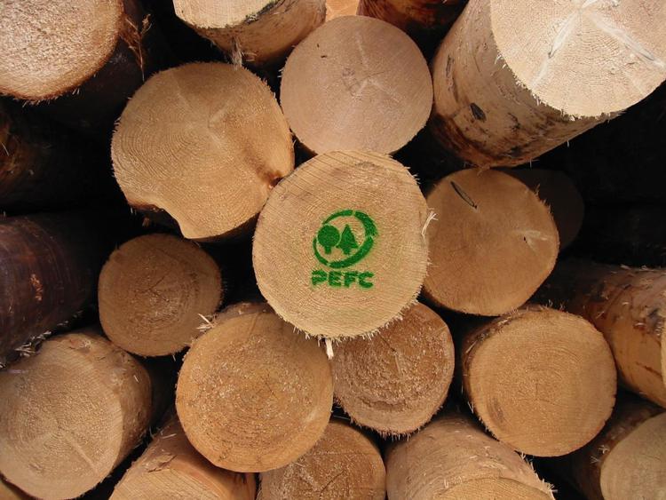 Foreste, alleate preziose per clima e biodiversità