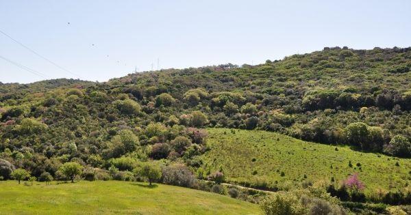 Salviamo il bosco nella valle del Marangone: già 800 firme in due giorni