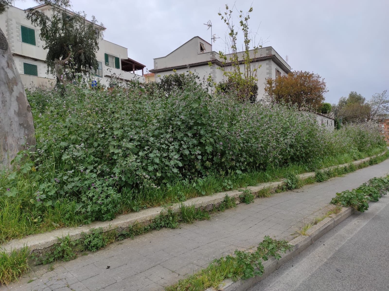 Via Nenni, erba alta e sterpaglie: i residenti alzano la voce