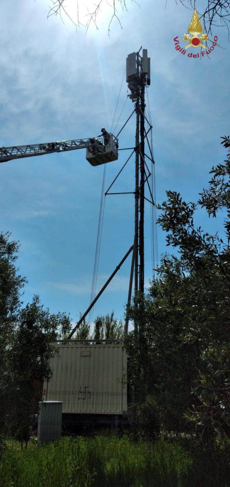 Gabbiano impigliato sull'antenna telefonica salvato dai vigili del fuoco