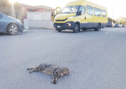 Gatta investita alla fermata  dello scuolabus: «Fate qualcosa  prima che tocchi a un bambino»