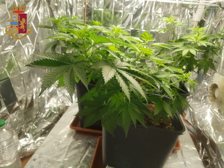 Nel lavatoio del palazzo una vera e propria serra di marijuana, arrestato 48enne