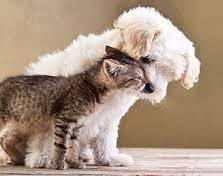 """""""Emergenze pelose"""", nasce lo sportello solidale  a quattro zampe per dare cibo a cani e gatti"""