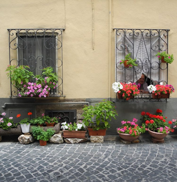"""Tolfa, torna anche quest'anno il concorso     """"La via più bella"""": via agli allestimenti con piante e fiori"""