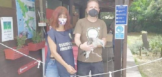 Cucciolo di gabbiano precipita  dal palazzetto comunale:  salvato dalle guardie zoofile