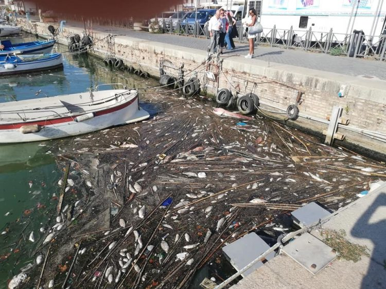 Invasione di pesci avvelenati, la darsena è pulita  ma lungo la ciclabile c'è odore di morte