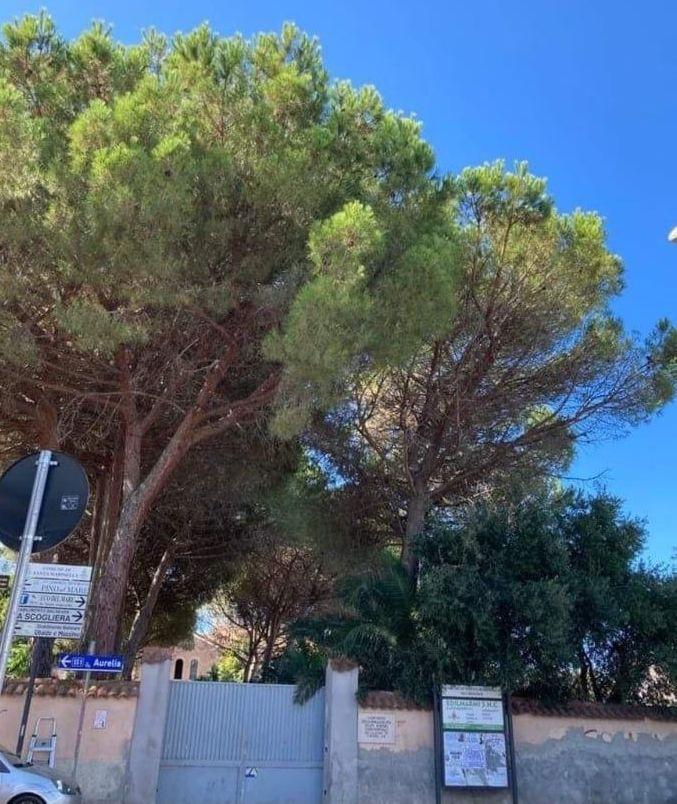 «A rischio essiccazione i pini     del convento dell'Immacolata»