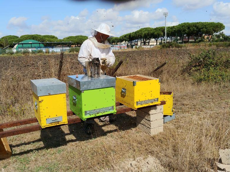 Cardarelli, installato un piccolo apiario didattico