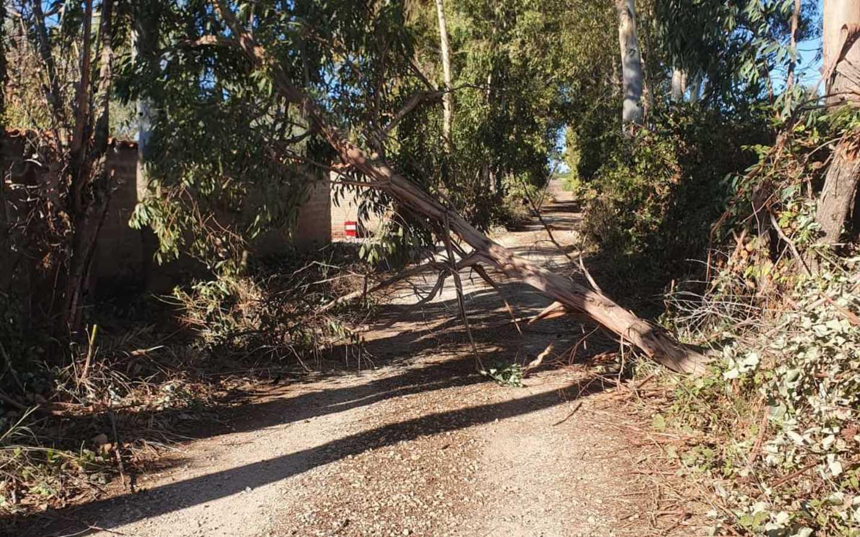 Cade albero in strada: tragedia     sfiorata ai Monteroni